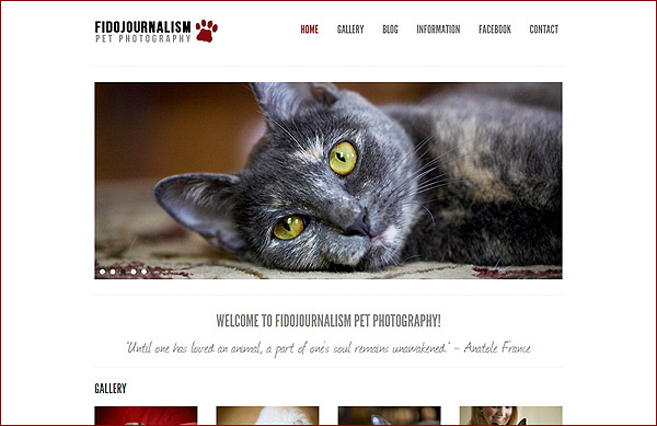 DC, MD, VA Pet Photographer | FidoJournalism Pet Photography